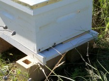 The bees are happy at home.
